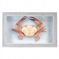 Large Real Crab in Box Frame - Blue Wooden